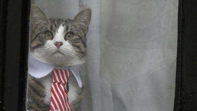 Misteri Keamanan Kucing Julian Assange Terpecahkan