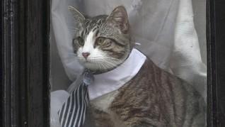 Gaya Necis Kucing Milik Pendiri WikiLeaks