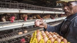 Darmin: Harga Telur dan Daging Ayam Kembali Normal Bulan Ini