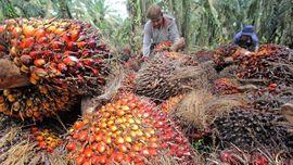 Jokowi Akui Kesulitan Dongkrak Harga CPO