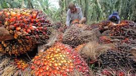 Jaga Harga, Jokowi Tunda Pungutan Ekspor CPO Sampai 1 Januari