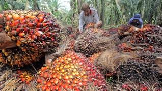 Gandeng Pupuk Indonesia, PTPN III Pangkas Biaya Produksi