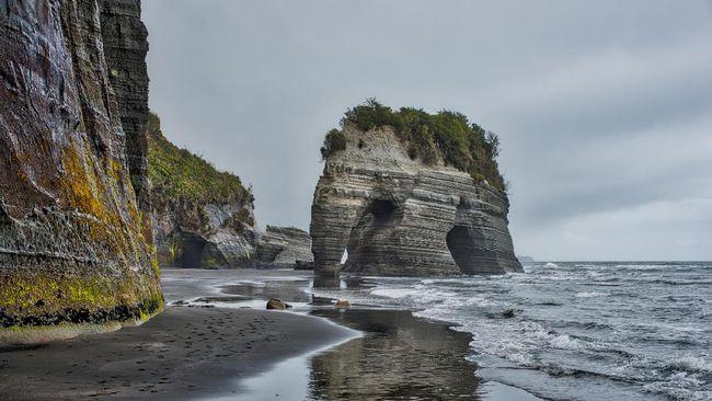 'Gajah' di Selandia Baru Kehilangan Belalai Akibat Gempa
