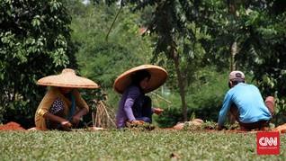 Melihat Proses Panjang Kerajinan Topi Caping di Ponorogo