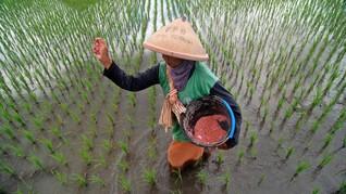 Petani Keluhkan Sulit Pupuk Subsidi, PT Pupuk Jamin Stok Aman