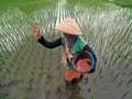 Pusri Tagih Kementan Bayar Dana Subsidi Pupuk Rp3,2 Triliun