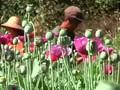 Menggantungkan Hidup pada Opium di Myanmar