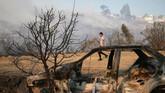 Menteri Dalam Negeri Chile, Mahmud Aleuy, mengatakan bahwa 400 orang langsung dievakuasi seiring dengan ancaman menyebarnya api ke 500 rumah di sekitarnya. (Reuters/Rodrigo Garrido)