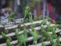 Kisah Manusia Burung dari Chennai, India