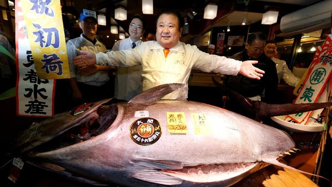 Download 40+ Gambar Ikan Tuna Terbesar Di Dunia HD Terbaru