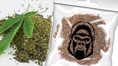 Kata Dokter Soal Ekstrak Dagga di Tembakau Gorilla yang Memabukkan