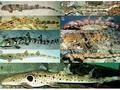 Lima Spesies Hiu Berjalan Ternyata Huni Indonesia