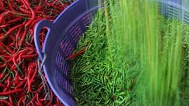 Harga Cabai Rawit Menggigit, di Gorontalo Tembus Rp118 Ribu