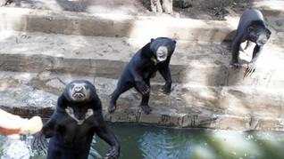 Kebun Binatang Bandung dan Solo Saling Bertukar Satwa