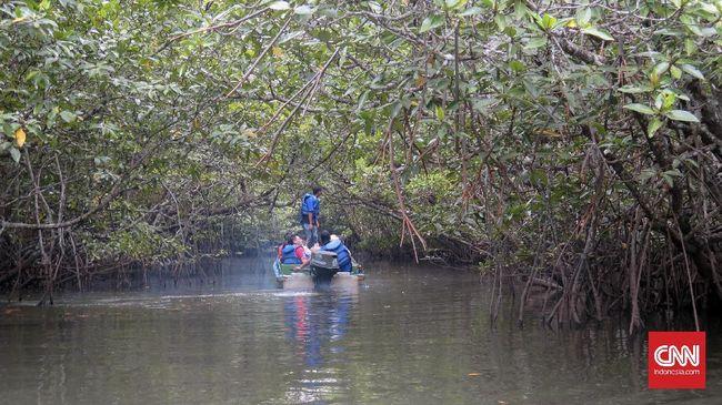 Jelajah Mangrove di Jalur Petilasan Suku Laut
