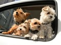 Paris Izinkan Anjing Peliharaan Naik Angkutan Umum