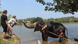 Penangkaran Gajah 'Pensiun' yang Ramai Disambangi Selebriti