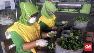 ILO: 40 Juta Orang Masih Terjebak dalam Perbudakan