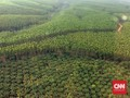 Pemerintah Serahkan 705,32 Ha Hutan Tanaman Rakyat di Jambi