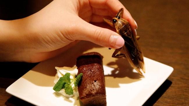 Pernah merasakan bagaimana rasanya menyantap kue cokelat bersama dengan serangga air di dalamnya? Kue cokelat ini disajikan bersama dengan serangga air dan whipped cream yang ditata cantik di dalam piring putih. (REUTERS/Toru Hanai).