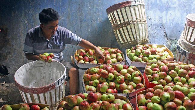 RegoPantes, Layanan Jual Beli Buah Segar Langsung dari Petani