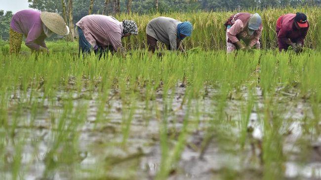 Reforma Agraria Jokowi Dinilai Tumpul Berantas Ketimpangan