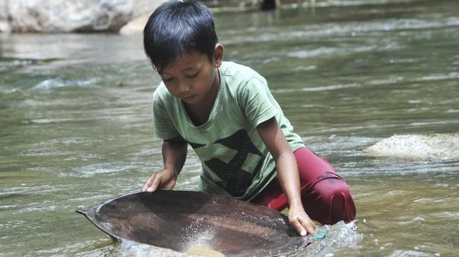 Seorang anak mendulang emas di Sungai Batang Sumpur Lubuk Tasapik, Nagari Sisawah, Sumatera Barat, Rabu (15/2). (ANTARA FOTO/Iggoy el Fitra)