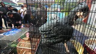 Otoritas Malaysia Tangkap 3 WNI Penyelundup 300 Burung Langka