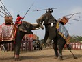 Pesta Buah di Hari Gajah
