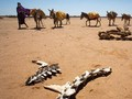 Kekeringan Somalia Terancam Jadi Bencana Kelaparan