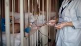 <p>Kolapsnya sistem kesehatan di Syria mempengaruhi ekspektansi umur penduduk Syria menjadi 60 tahun untuk pria, 70 tahun untuk wanita di tahun 2014. Sementara tahun 2009, 72 dan 75 tahun. Hanya 44 persen rumah sakit yang melayani unit lengkat. Seperempatnya, malah sudah tidak beroperasi lagi. (REUTERS/Omar Sanadiki)</p>