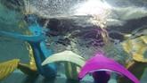 Dengan aneka warna ekor putri duyung, mereka berlatih berenang dengan gesit dan saling berkejaran. Tentunya latihan berenang dengan memakai ekor putri duyung ini memiliki kesulitan tersendiri. (AFP PHOTO / Natalia Kolesnikova)