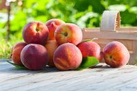 Buah persik menyimpan vitamin A dan C yang mana membuat kulit sehat saat cuaca terik menyerang, demikian seperti yang ditulis Men Fitness. Foto: iStock/The Asahi Shimbun