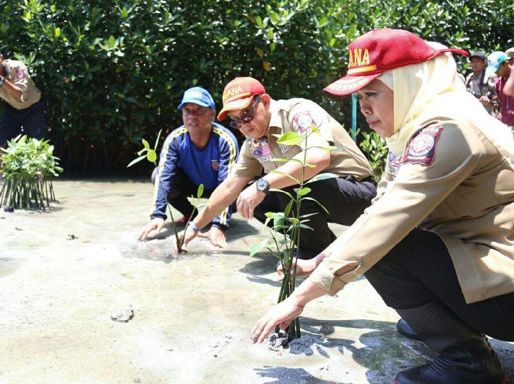 Menteri Sosial Khofifah Indar Parawansa (kiri) dan Direktur Perlindungan Sosial Korban Bencana Alam Kemensos RI Adhy Karyono melakukan penanaman manggrove di puncak perayaan HUT ke-13 Tagana di Pulau Pramuka, Kepulauan Seribu, Jakarta, Jumat (24/3). Pool/dok. Kemensos.