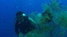 Area Selam di Komodo Tidak untuk Menangkap Ikan