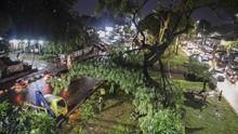 Sebanyak 187 Pohon di Jakarta Tumbang dalam Dua Pekan