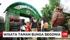 Taman Bunga Begonia Menjadi Salah Satu Destinasi Wisatawan