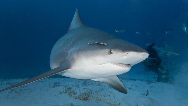 Tinggi Kandungan Merkuri, Lima Ikan Ini Jangan Dimakan