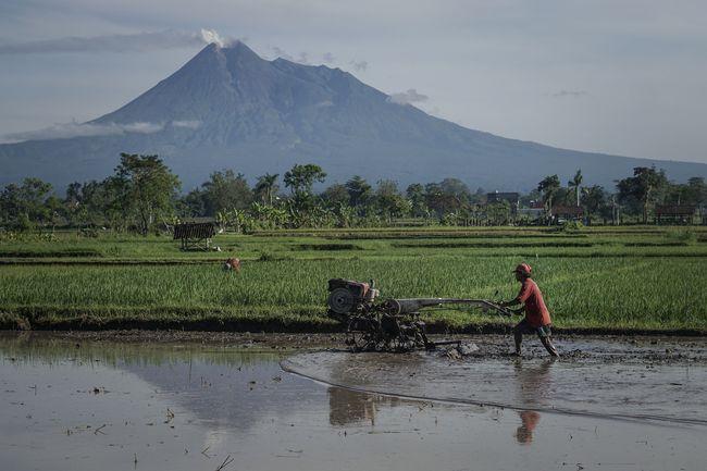 Peluang Pertanian Indonesia di Forum WTO 'Zaman Now'
