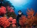 Indonesia Pamerkan Surga Bawah Laut di Ajang ADEX Singapura