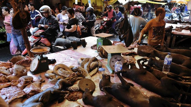 Bersiaplah terkejut dan menyiapkan kekuatan jantung saat melihat jejeran pedagang daging yang menjual berbagai macam daging binatang eksotis. Warga Manado memang terbiasa memakan berbagai jenis binatang seperti anjing, babi, biawak, kelelawar atau biasa disebut paniki, ular (patola) hingga tikus. (AFP PHOTO/Bay ISMOYO)
