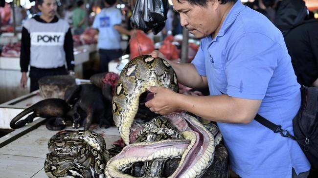 Karena daging hewan yang dijual di sini unik-unik, Pasar Tradisional Tomohon ini pun dikenal dengan nama pasar ekstrem. Harga daging di sini bervariasi dan tidak tetap karena bergantung pada kesediaan stok daging-daging ini. (AFP PHOTO/Bay ISMOYO)