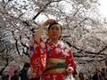 Prediksi Musim Mekar Bunga Sakura di Jepang Tahun Ini