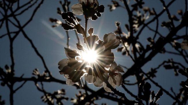 Lokasi Wisata Flora Bulan Juni di Jepang