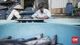 Hasil tangkapan ikan nelayan Kamal Muara sebagian besar di jual ke tengkulak di pelelangan ikan di Kamal Muara. (CNN Indonesia/ Hesti Rika)