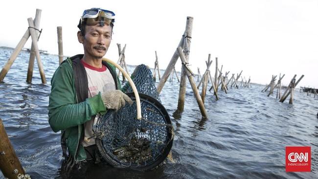 Kasarudin (38) selain memiliki Sero dan Bagan, memiliki tambak kerang hijau. Bagan hampir sama dengan Sero, namun yang membedakannya adalah Bagan berbentuk persegi. (CNN Indonesia/Hesti Rika)