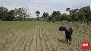 Ribuan Orang Masyarakat Adat Jadi Korban Konflik Agraria