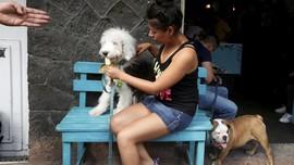 Trik Meredakan Anjing Stres dari Cesar Millan