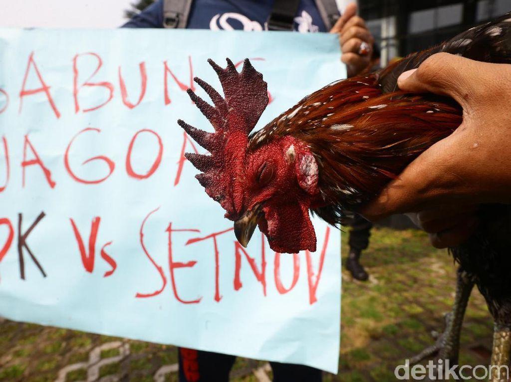 Pertunjukan sabung ayam ini dilakukan oleh massa yang mengatasnamakan Komunitas Cinta Bangsa.