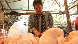 Pemerintah Cari Tahu Penyebab Harga Ayam Anjlok